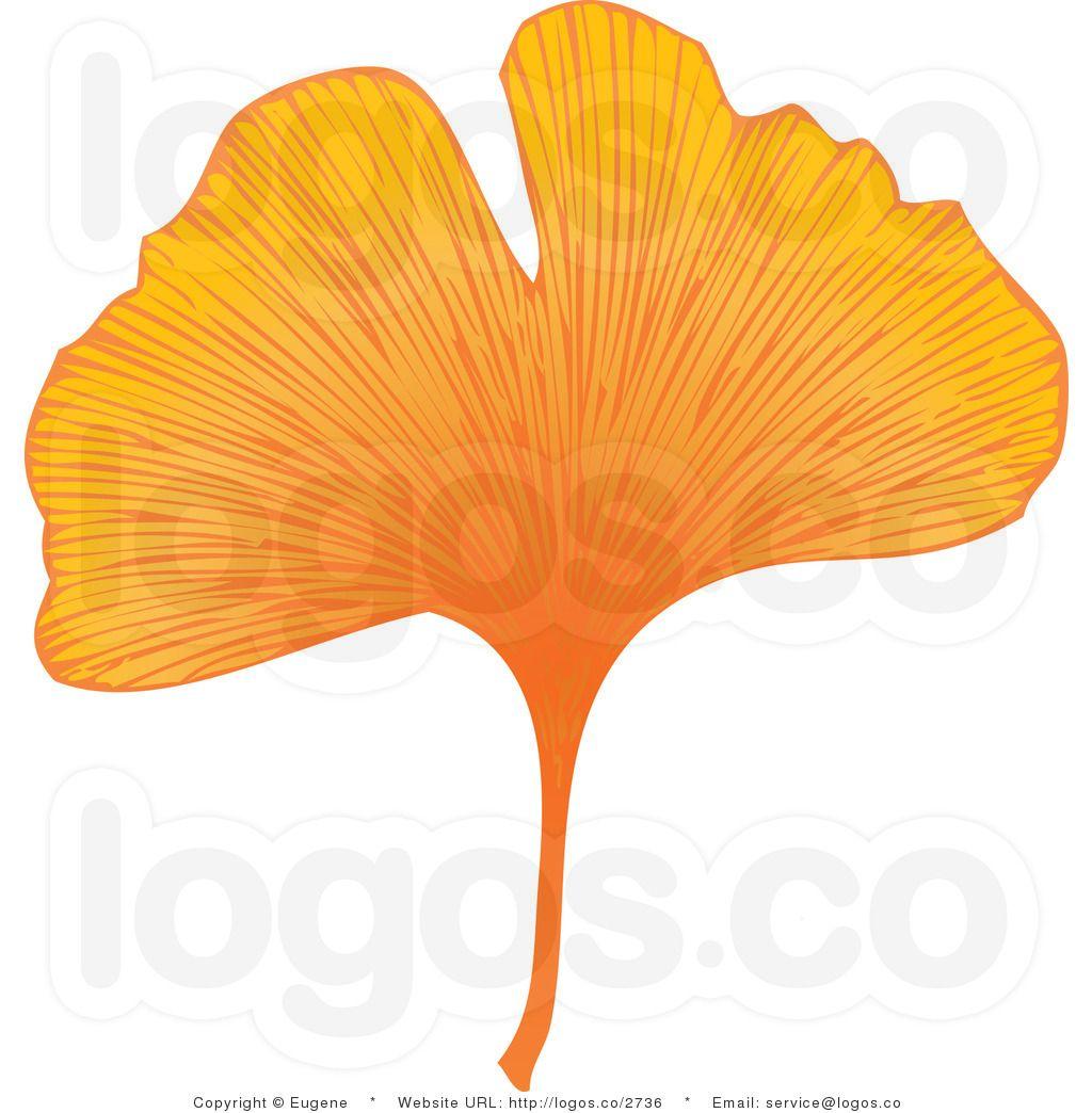 Royalty Free Orange Yellow Ginkgo Leaf