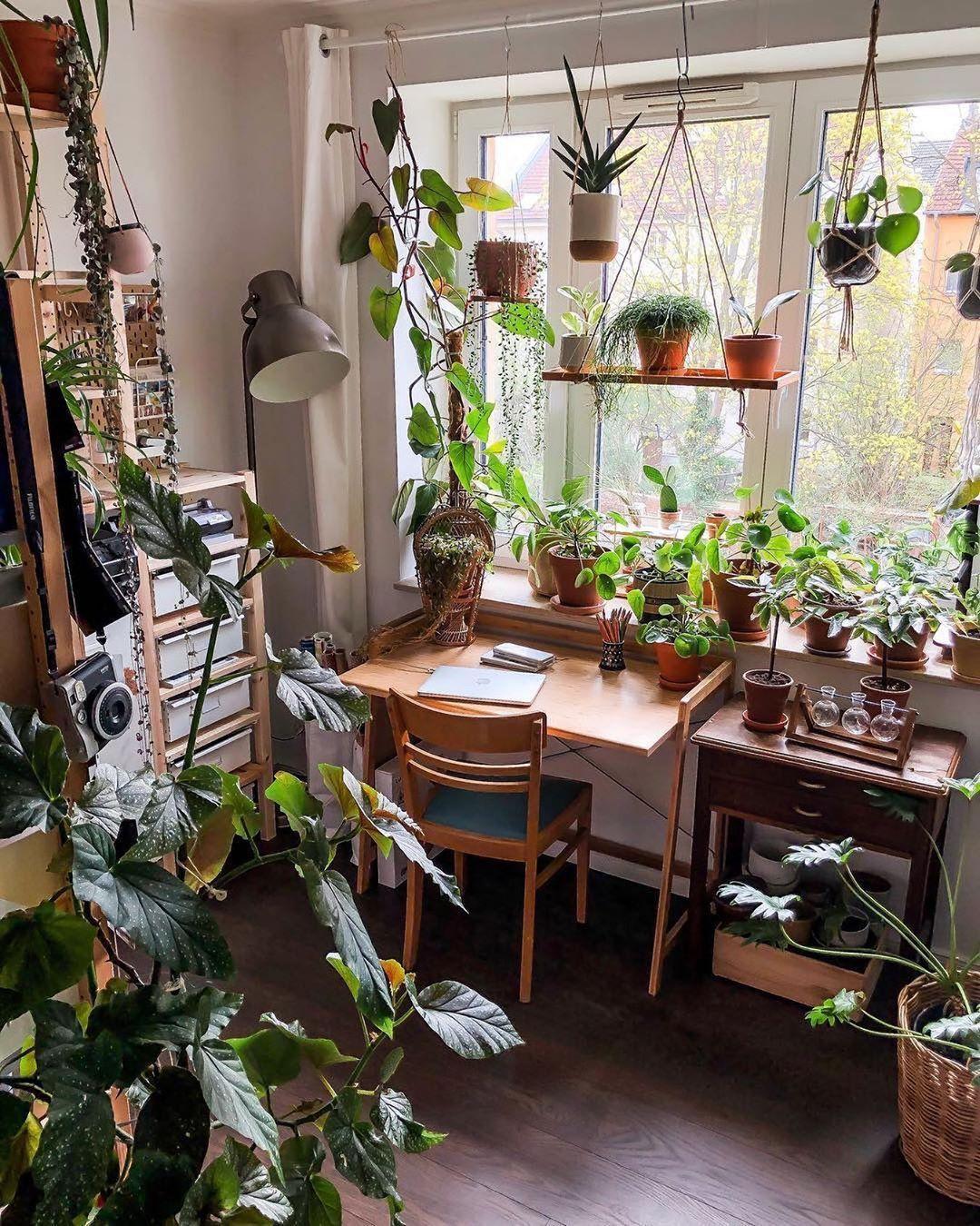 Pin on Indoor Plants Decor