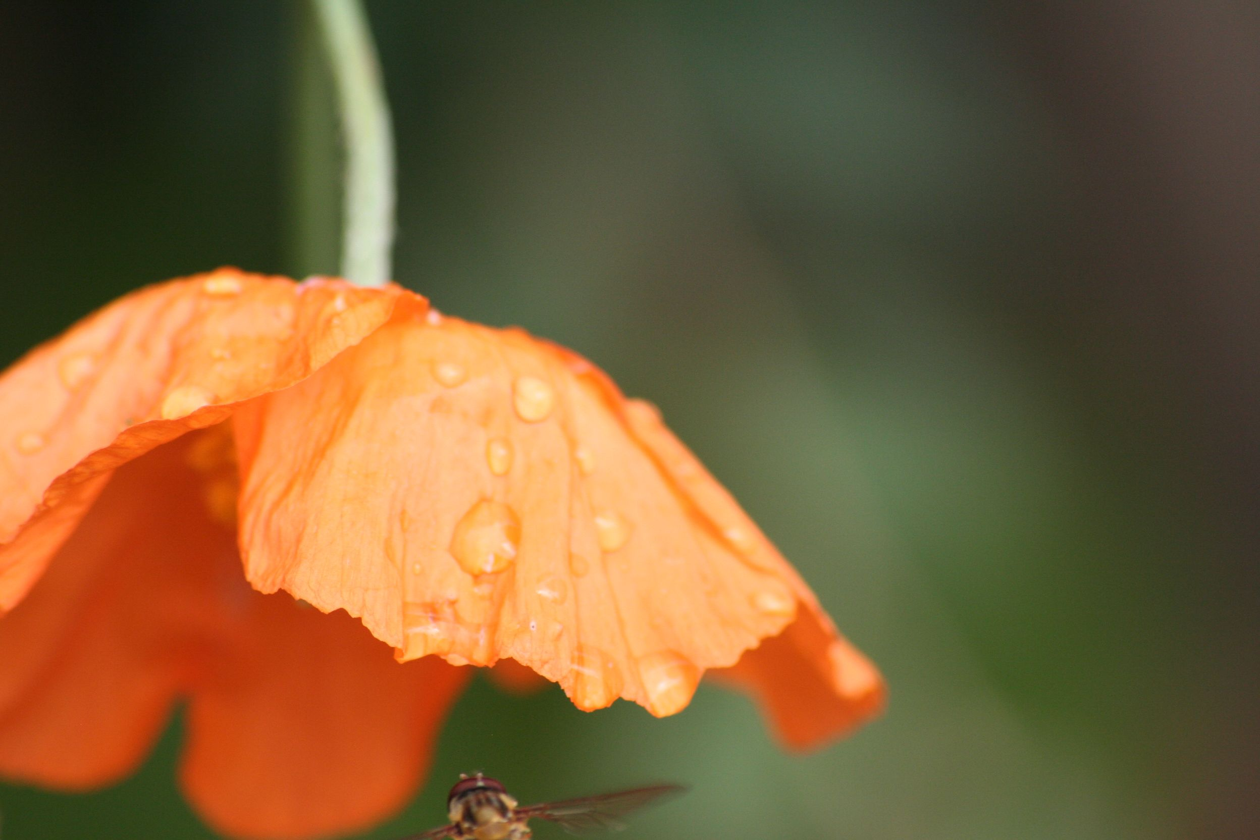 Cant remember what this fly thing was or what the flower is, well done!