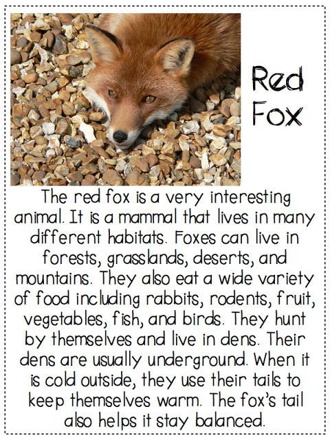 What Does The Fox Say Finding The Main Idea And Details In A