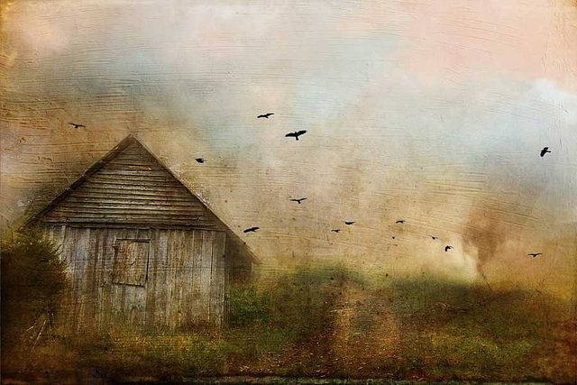 Cheryl Tarrant,  using color, textures and overlays in her photography