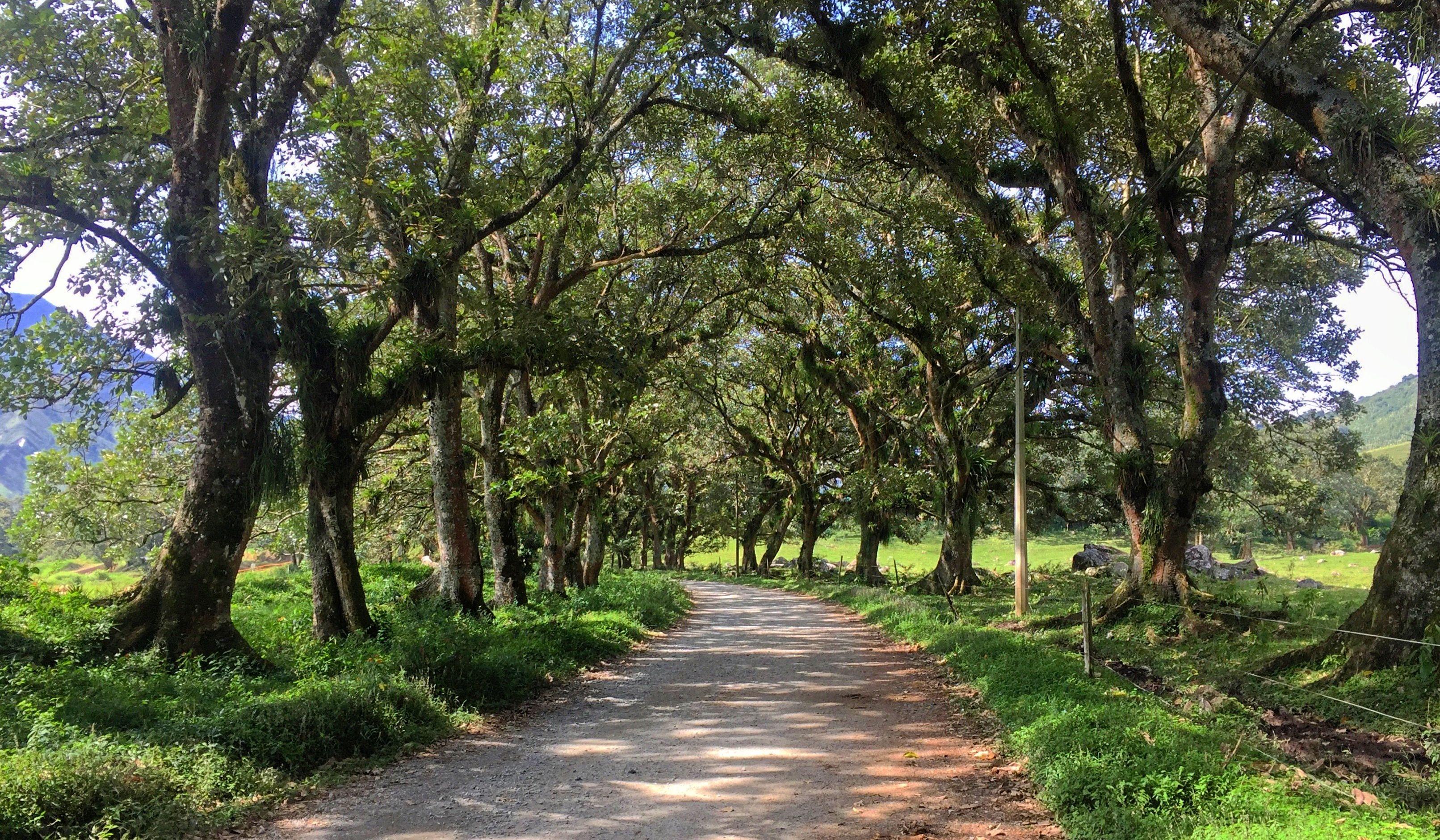 🌳🛤🌳   Naturaleza, Nature, Sendero, Camino, Path, Árboles, Trees