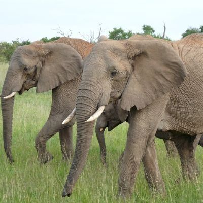 2 nights 3 days amboseli national park kenya africa adventure safari