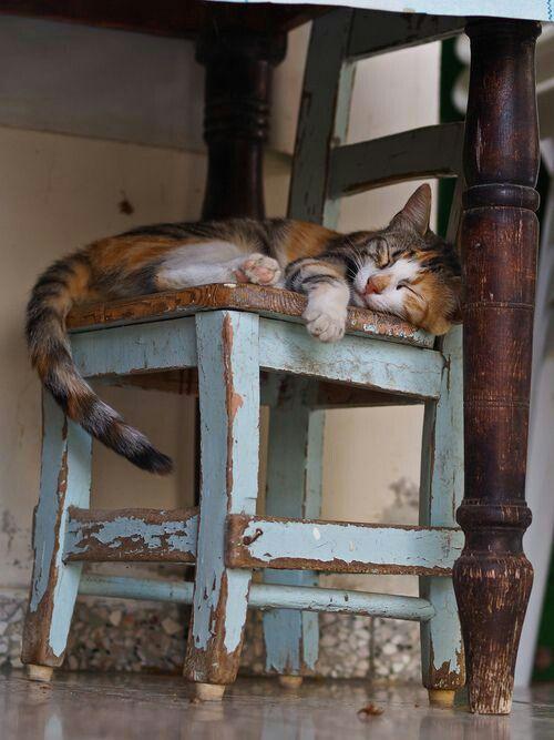 Sleeping   Vintage