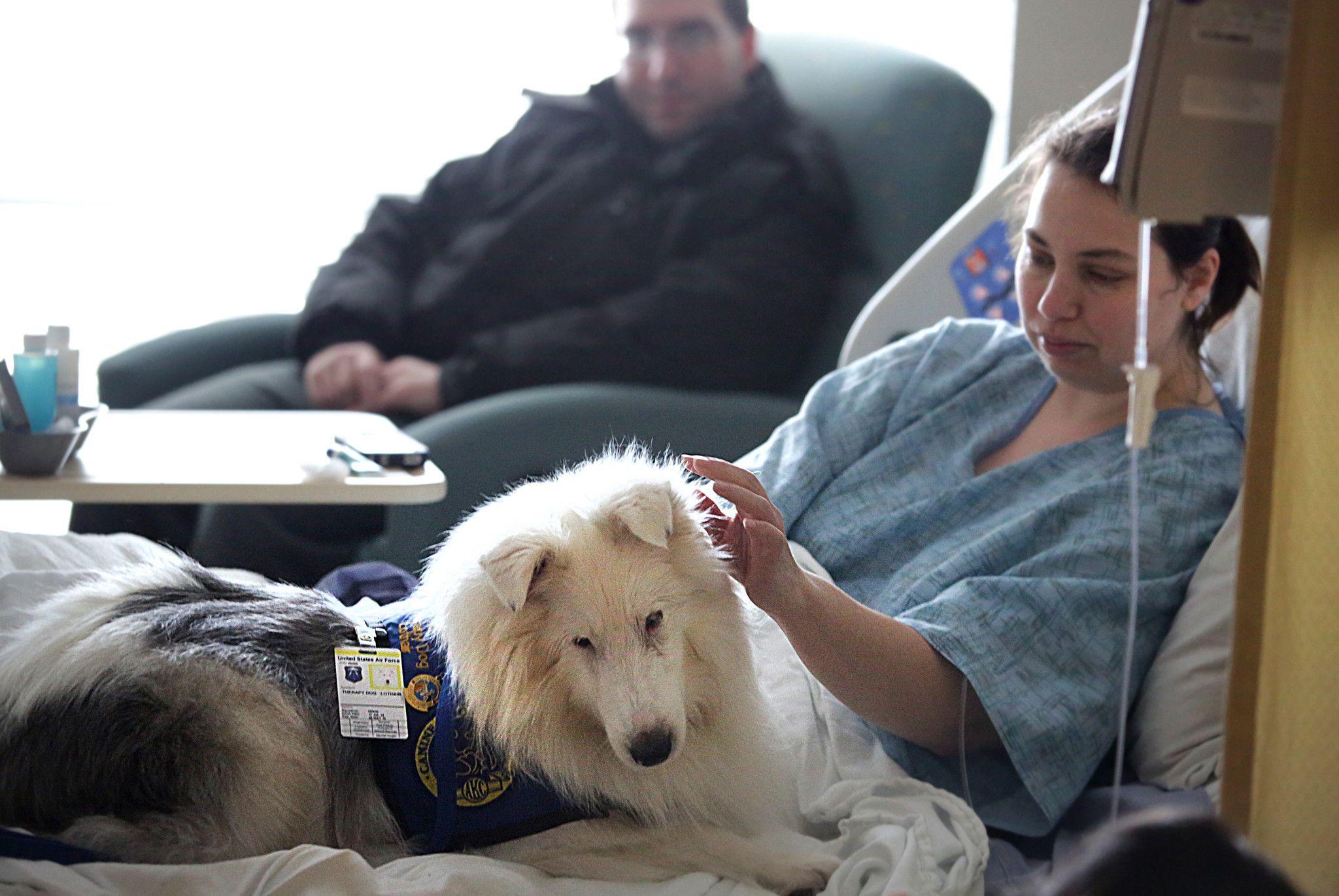 16+ Martin downs animal hospital images