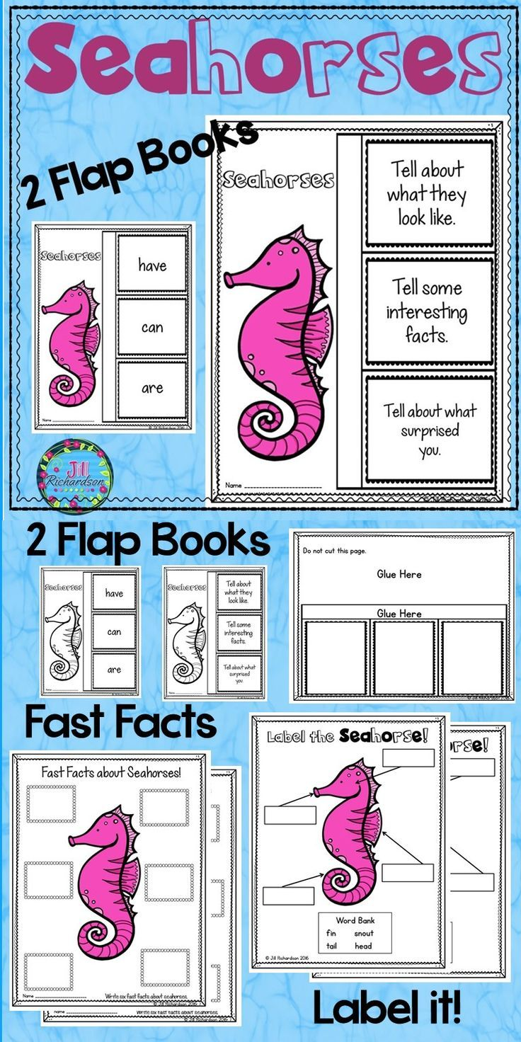 Have Your Children Research Seahorses This Resource Includes Four Ways For Your Children To Share What Th Flap Book Teaching First Grade Teaching Kindergarten [ 1472 x 736 Pixel ]