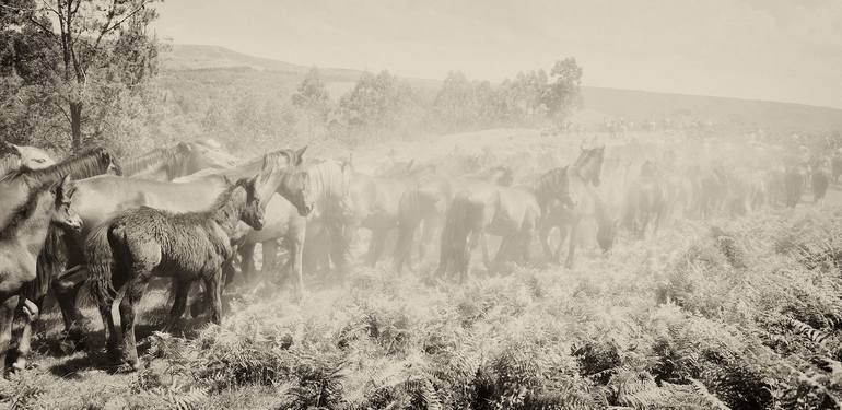 Photo of Original Animal Photography by Andrew Lever | Fine Art Art on Paper | THE HERD – Limited Edition 1 of 20