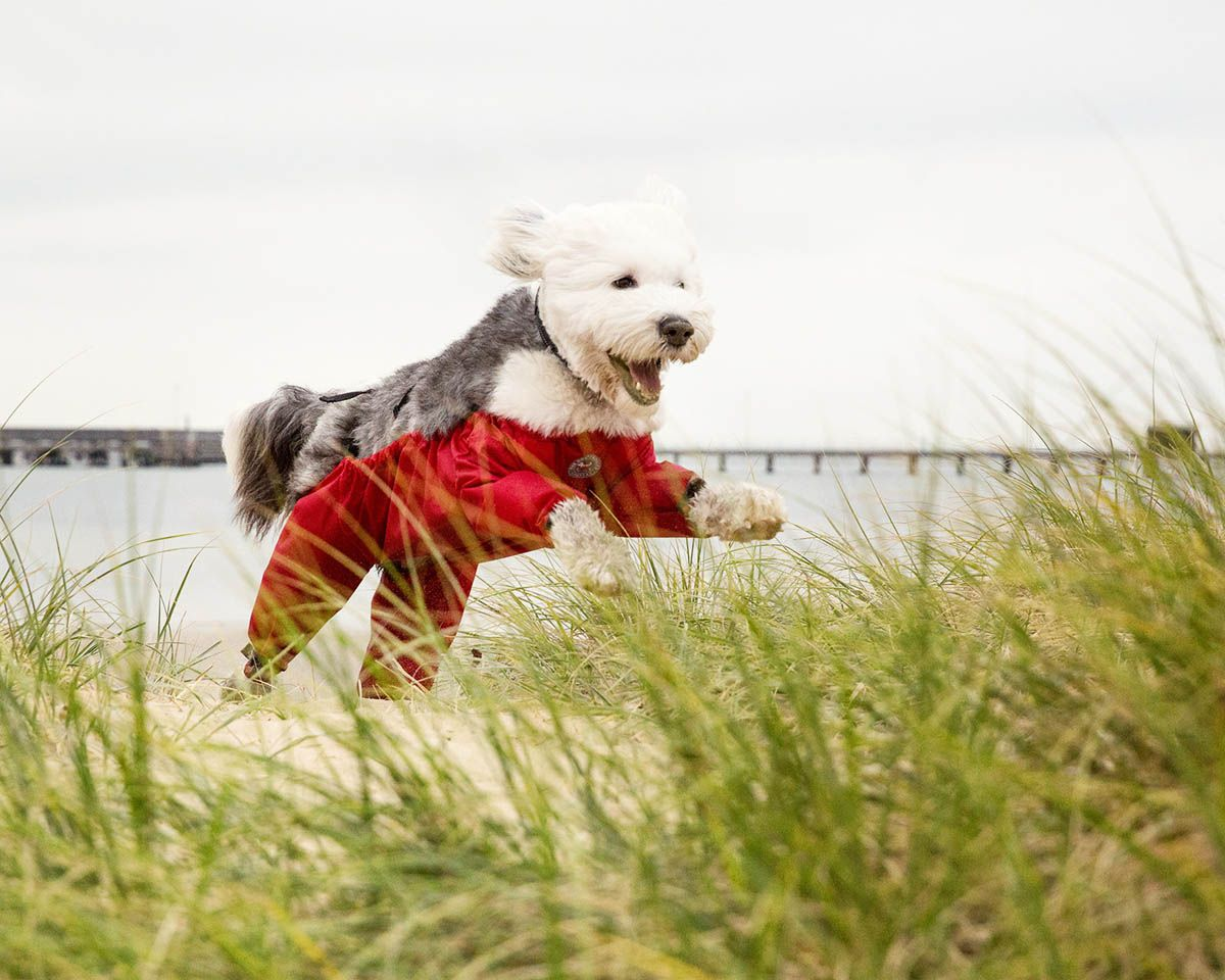The Dog Trouser Company Now In Australia Australian Dog Lover Dogtrousers Dogpants Dogtrousersaustralia Australiand With Images Dogs Dog Lovers Dog Pants