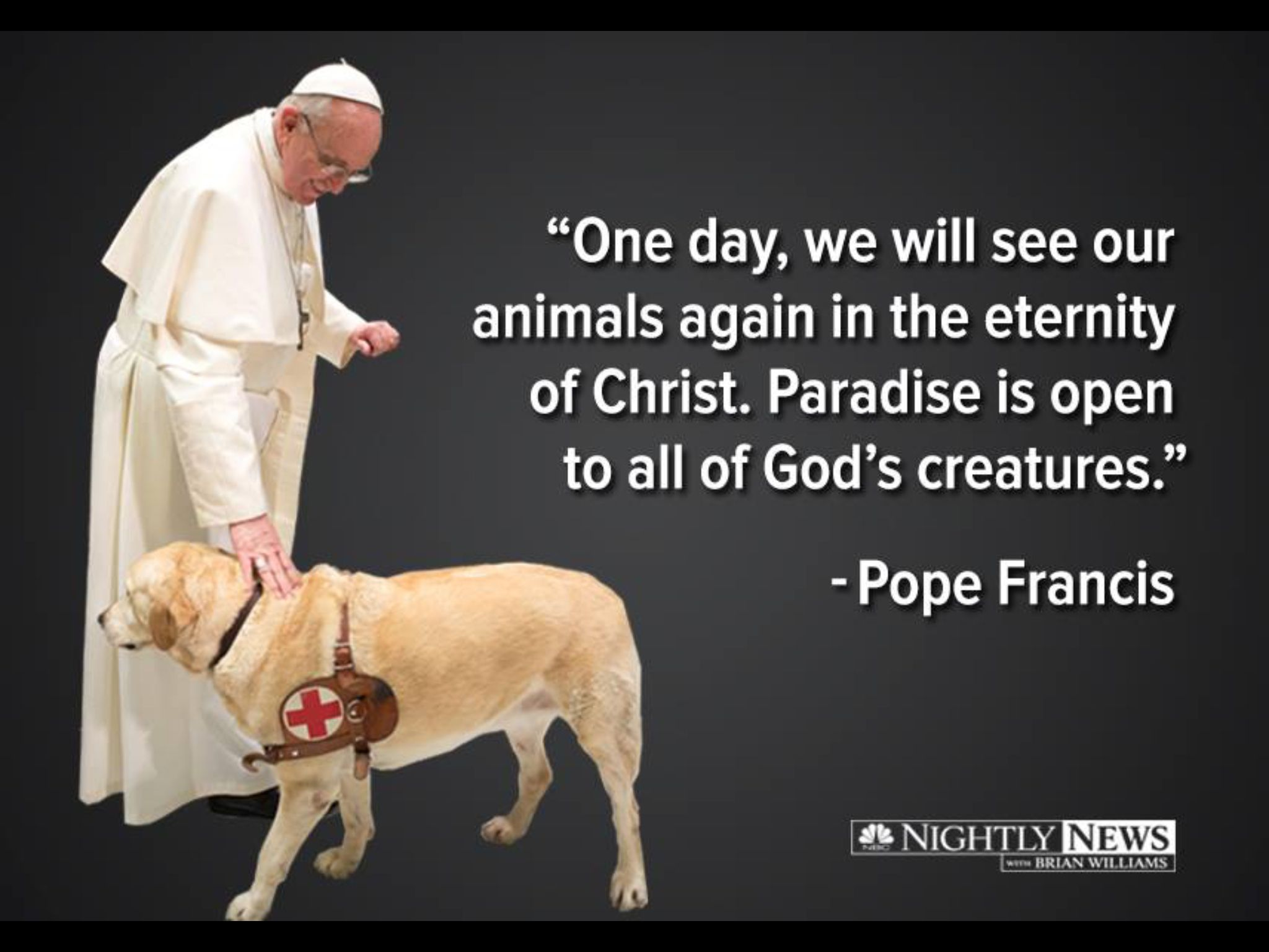 Missing You My Beloved Scout Dogs Pope Francis