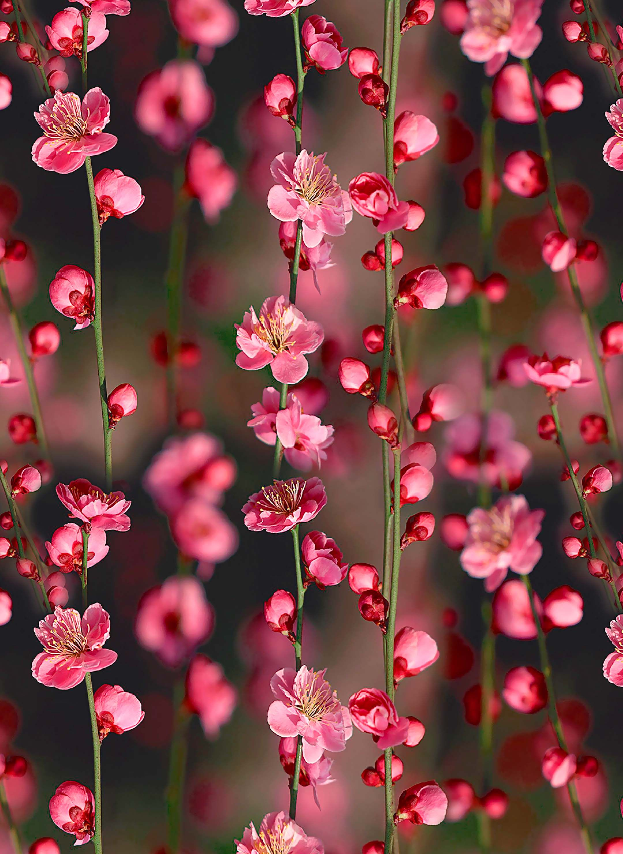 Pin by Sissyeko on Wallpaper Pink flowers wallpaper