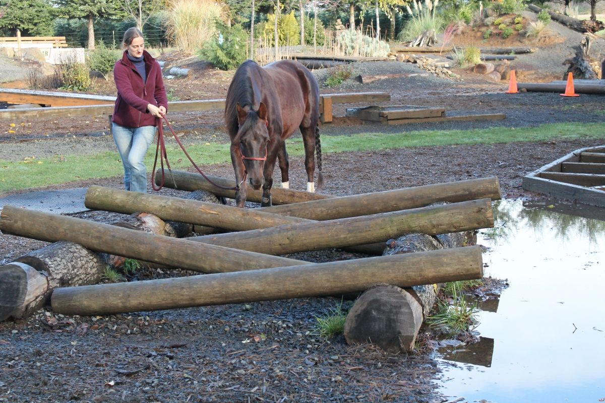 Mountain and Extreme Trail course obstacles | HORSE TRAILS