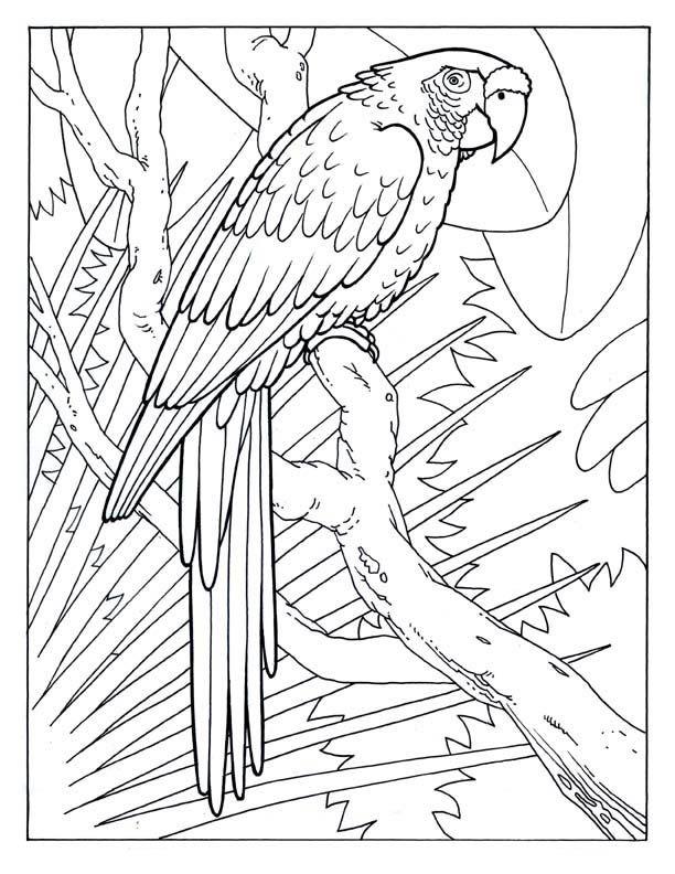 Conhecido Arara vermelha | Printables | Pinterest | Arara, Vermelho e  WZ15