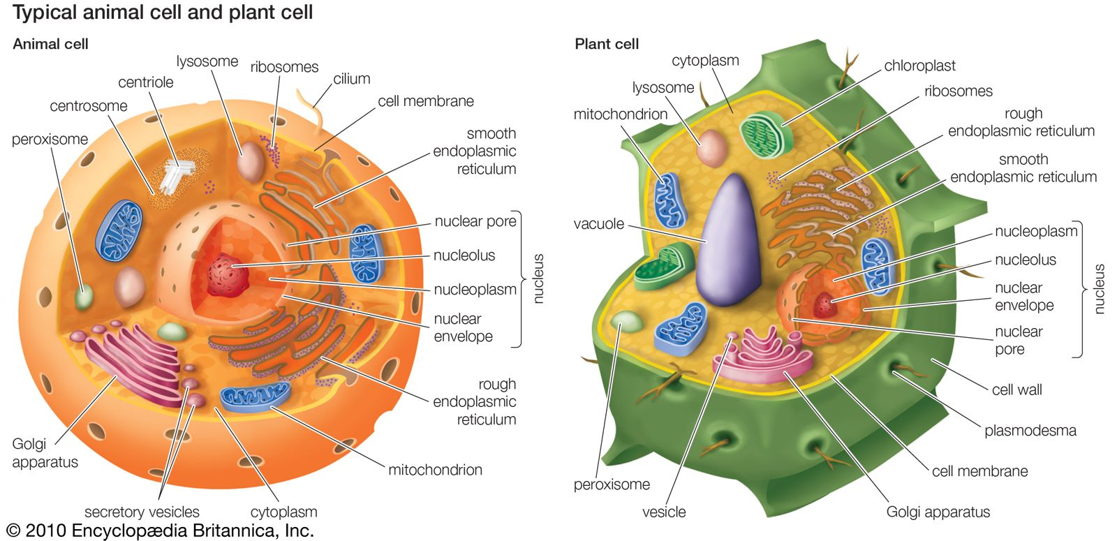 World Of Science Craft Achievement Badges Animal Cell Plant And Animal Cells Plant Cell Diagram
