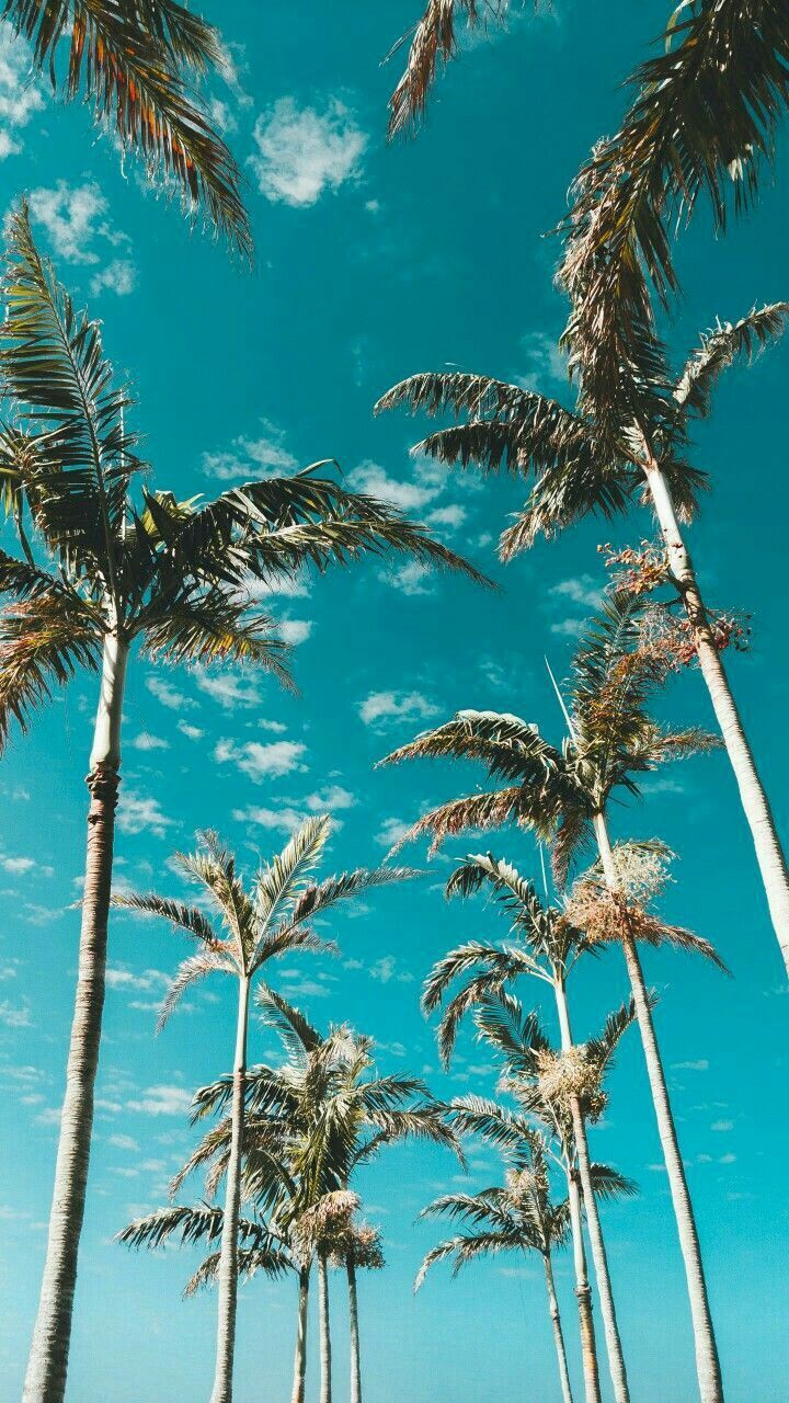 Blue Vegetation Sky Plant Tree Azure Cute Wallpapers Aesthetic Wallpapers Homescreen Wallpaper