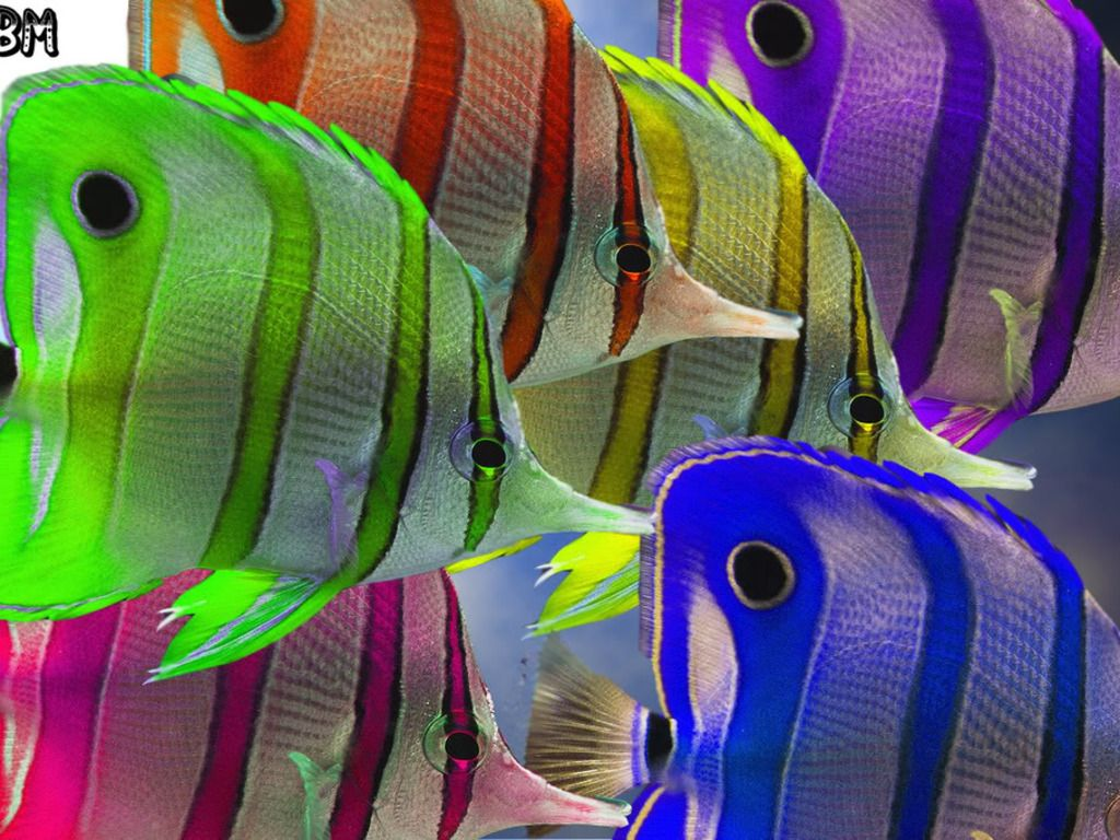 so bright so pretty | color | Pinterest | Colorful fish, Creatures ...