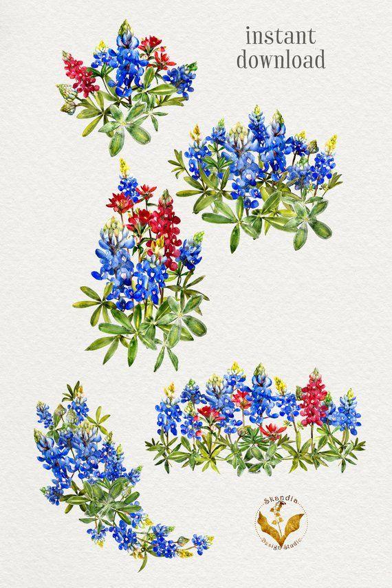 aa5f2efbbe8cc Bluebonnet Clipart, handpainted clipart, wildflower clipart, watercolor  clipart, boho clipart, flora