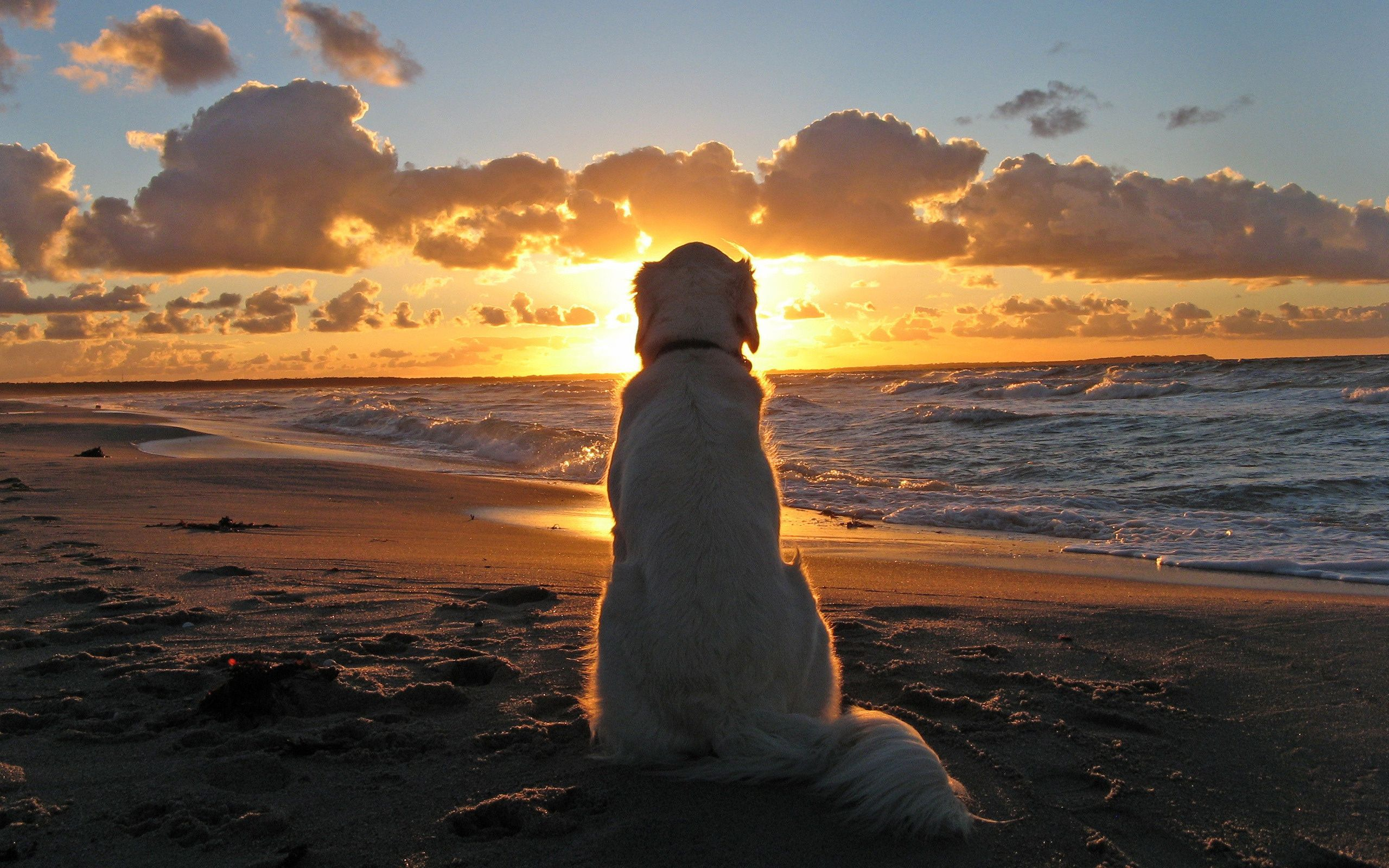 sea beach sunset dog silhouette wallpaper x | hd wallpapers