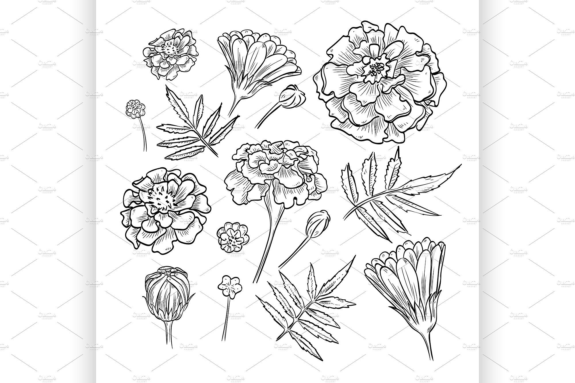 Vector Hand Drawn Elegant Marigold Marigold Tattoo Flower Tattoo Drawings How To Draw Hands