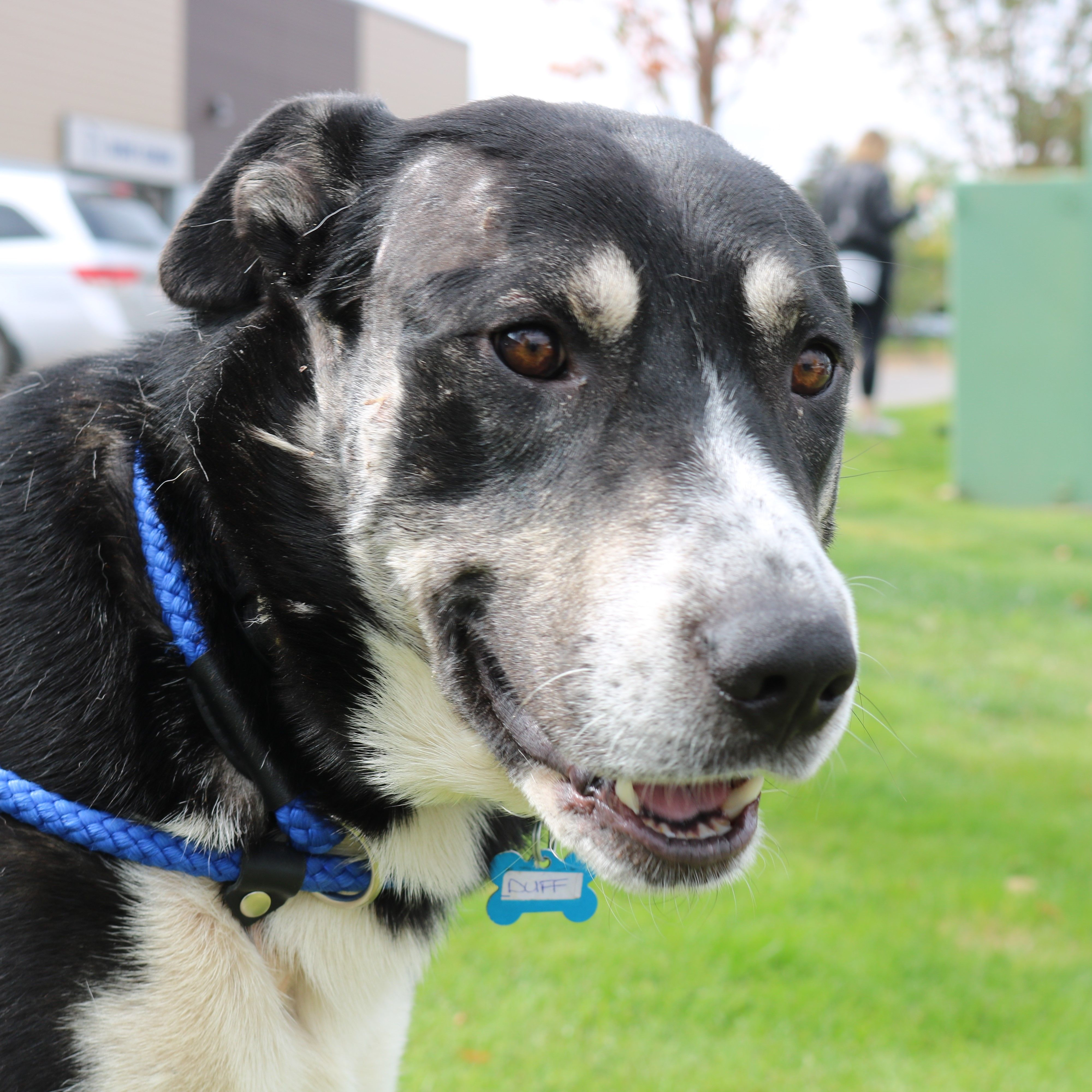 Duff Pawsitive Match Rescue Foundation Calgary Based
