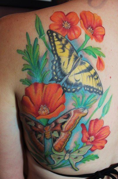 California Poppies, Swallowtail butterfly, Atlas moth, and ...