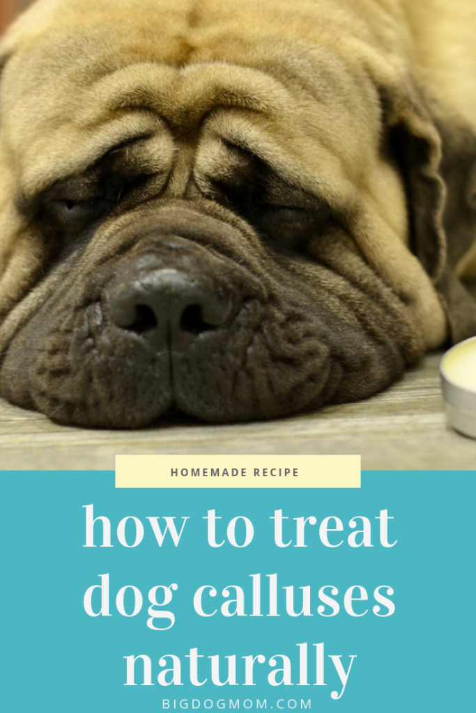 Treat Dog Calluses at home with DIY Elbow Butter for Dogs