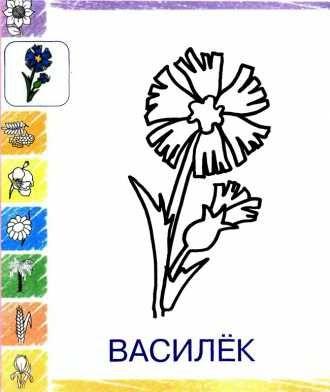 раскраска для малышей Василёк бесплатно распечатать ...