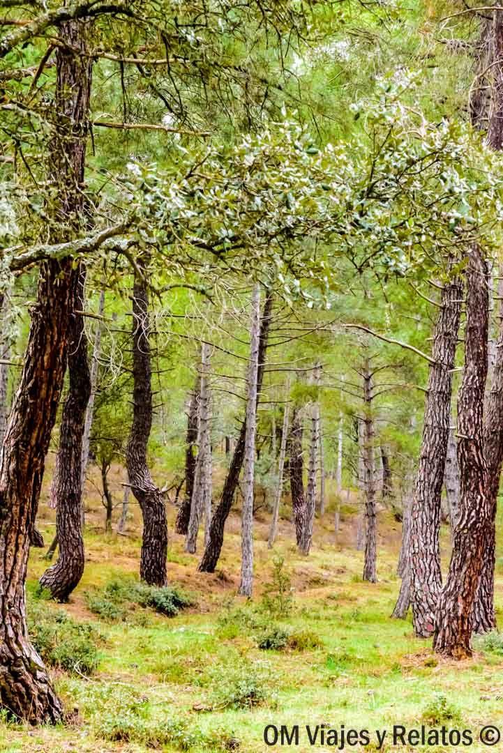 Sierra Norte de Madrid: 3 rutas de naturaleza asombrosa a poco más de una hora de Madrid
