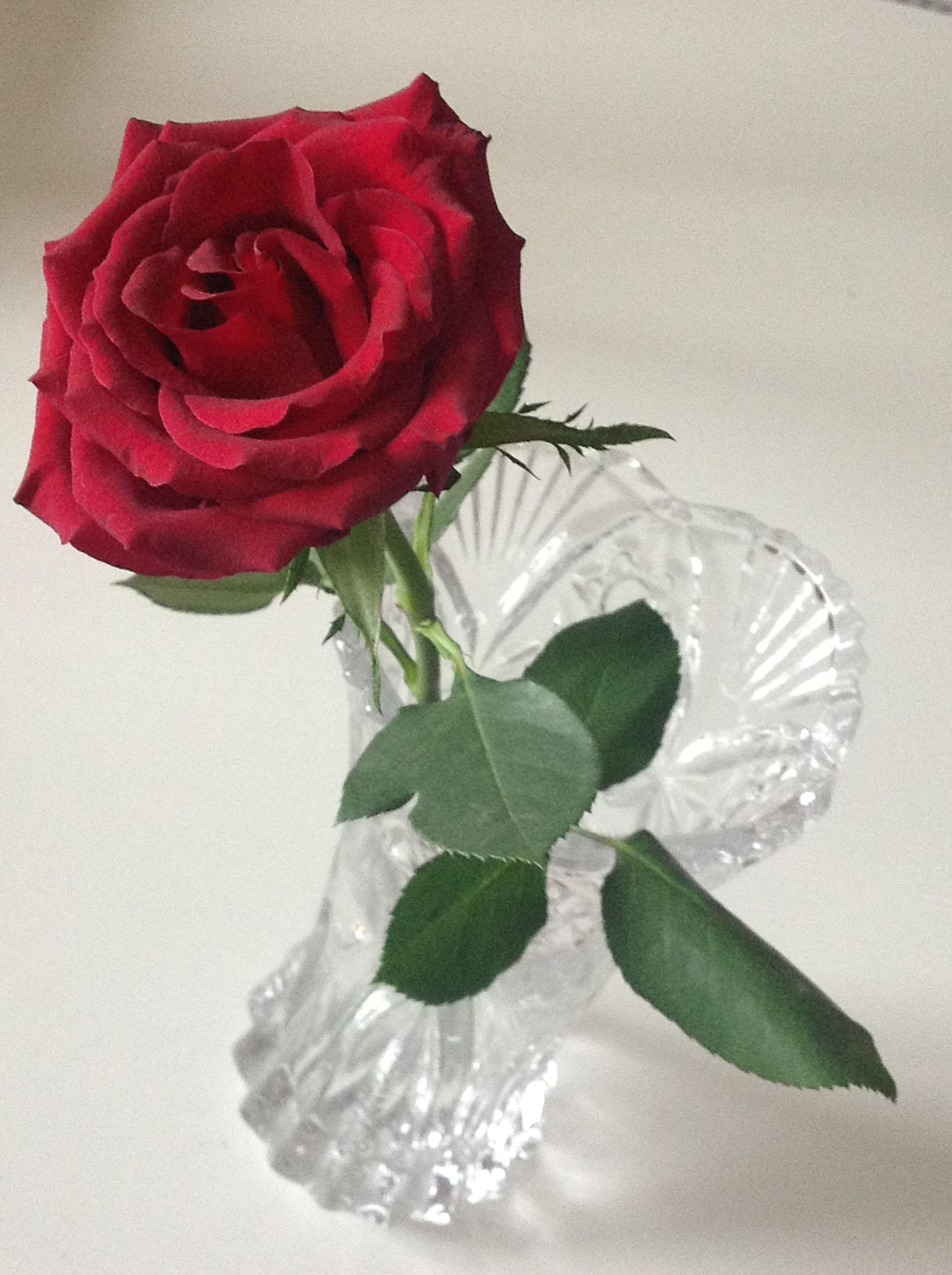La rosa dell'amore