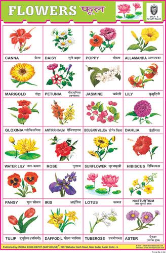 Flower Chart 24 Photos White Flower Chart Preschool Charts Charts For Kids