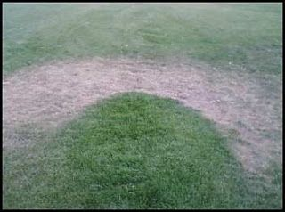 A Rainbow-Shaped Patch of Dry Grass