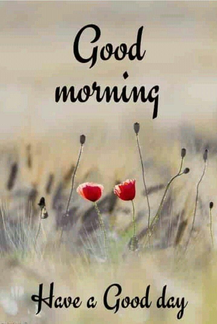 Good Morning | Good morning quotes, Good morning images