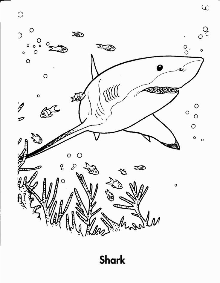 Shark Coloring | Marine life coloring pages | Pinterest