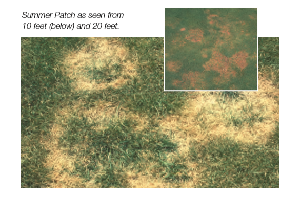 25+ Anthracnose on golf greens info