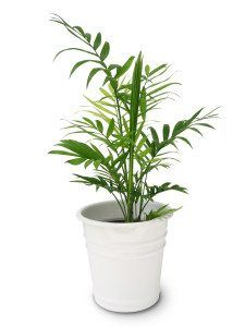 12 of the Best Plants for Cleaner Indoor Air is part of Living Room Plants Bamboo - Before we lived in modern houses, we built shelters much more in sync with nature, and reaped the benefits of breathing in fresh air each day  In modern times, the pollution in our air along with the fact that we live away from nature (for the most part) severely affects the quality of the air