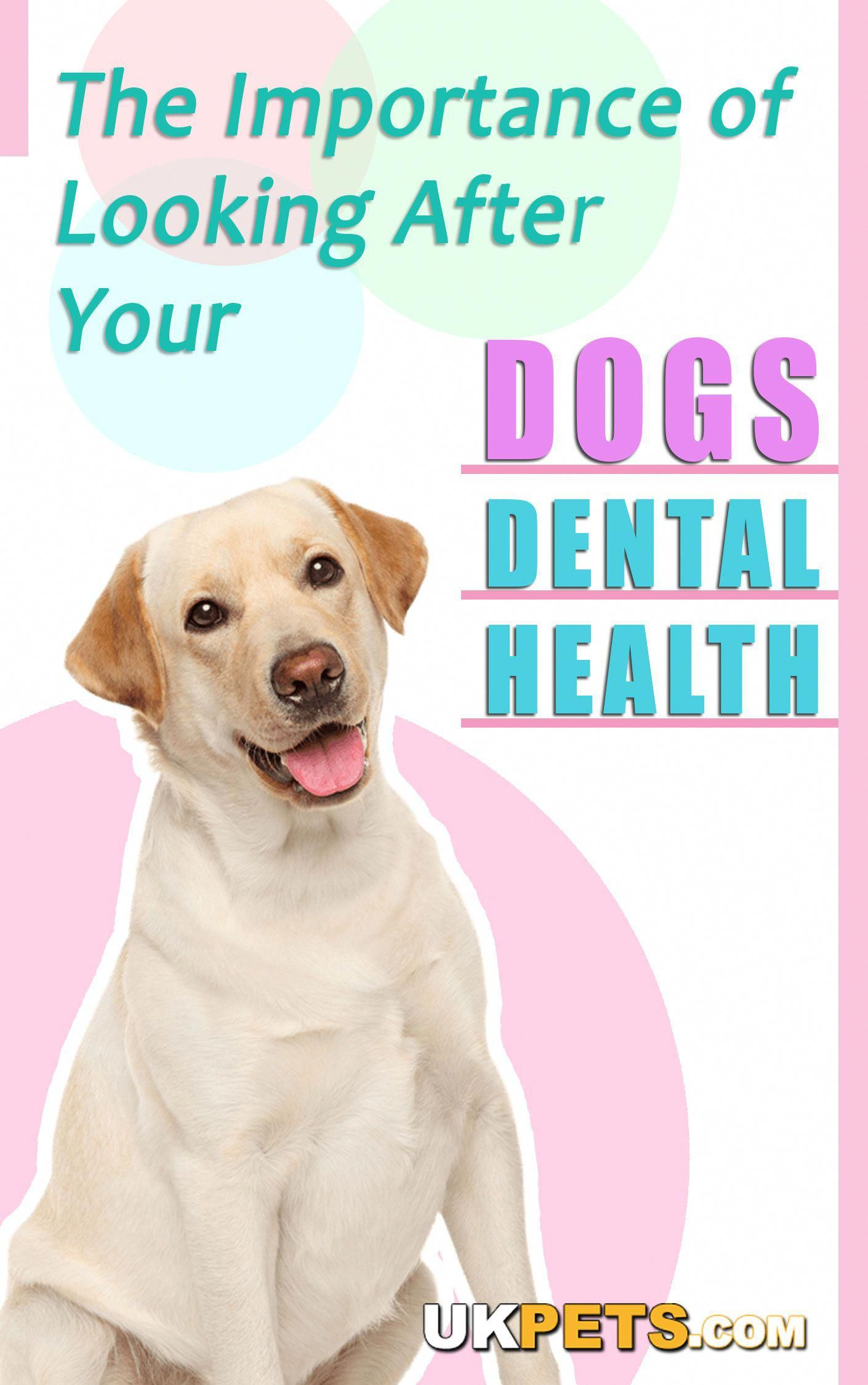 Dogs are not as likely to develop cavities compared to ...