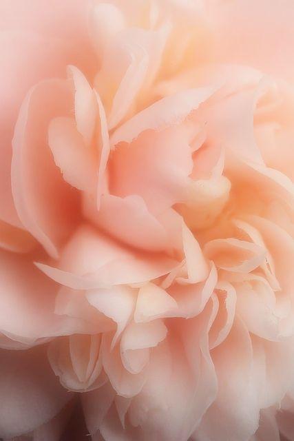 Download premium vector of Pastel peach watercolor