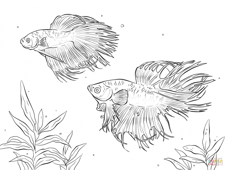 Siamese Fighting Fish Coloring Pages Printable For Free With Images Fish Coloring Page Animal Coloring Pages Fox Coloring Page