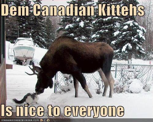 Everyone should have a Moose .