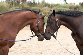 Hevoset, Rakkaus, Makea