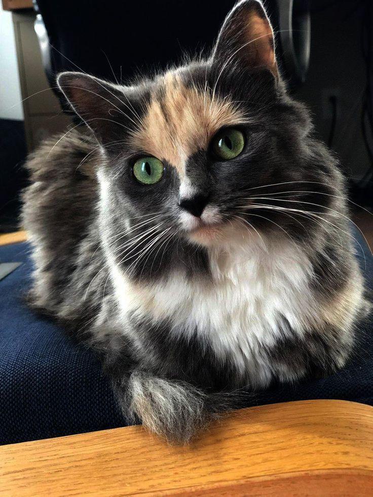 Niedliche Tiere zum Zeichnen einfach vorbei an Katzen und