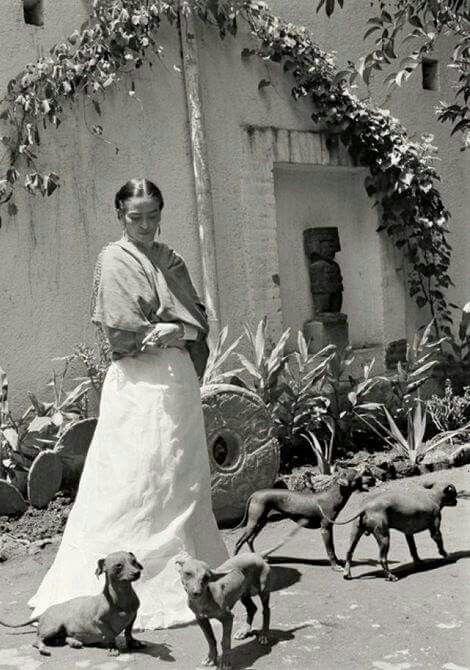 Resultado de imagen para mascotas de frida kahlo