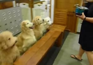See It Adorable Dogs Say Grace Before Meal Put Away Dishes
