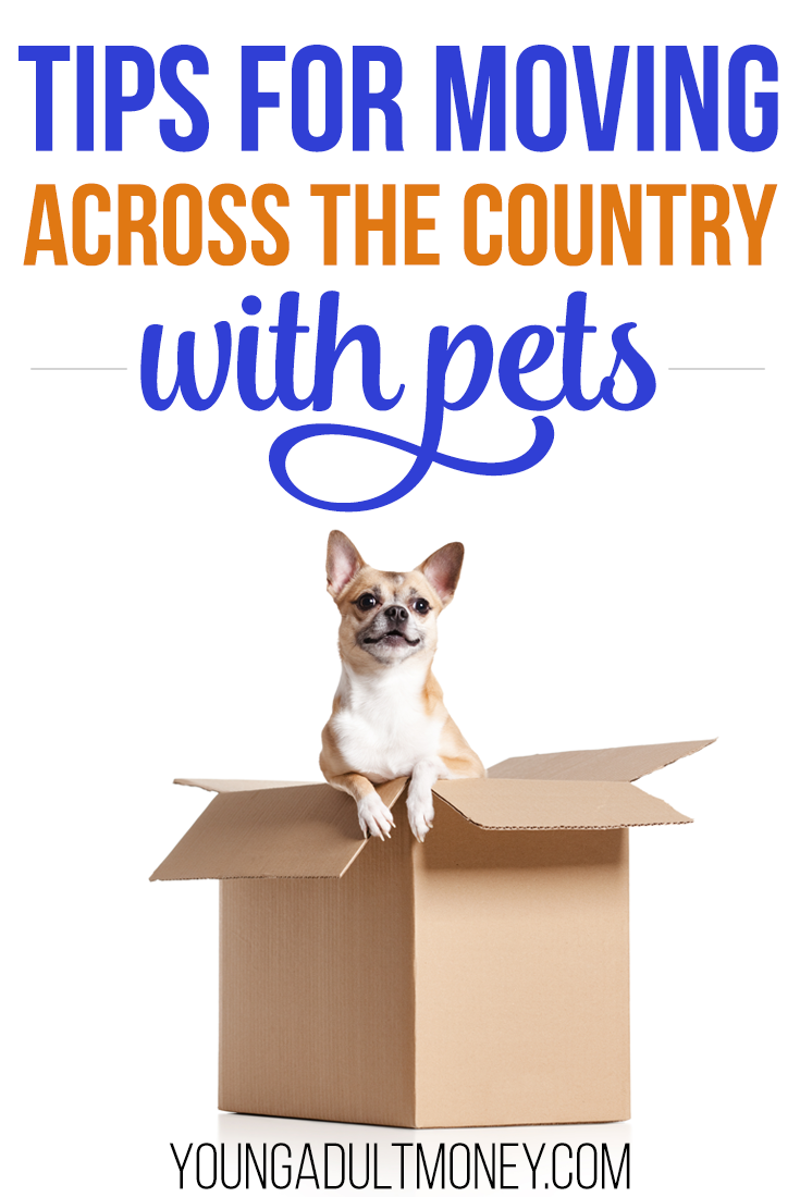 Tips for Moving Across the Country with Pets Making a