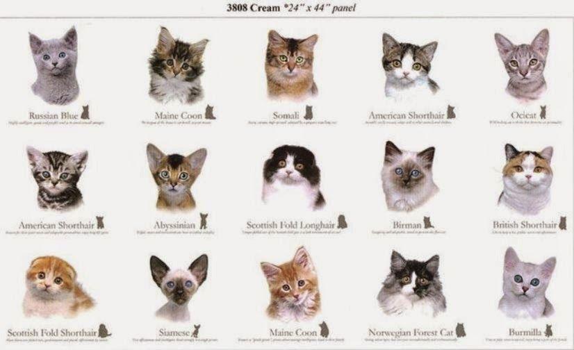 Kartinki Po Zaprosu All Breeds Of Cats With Pictures And Names Koshki Kartinki