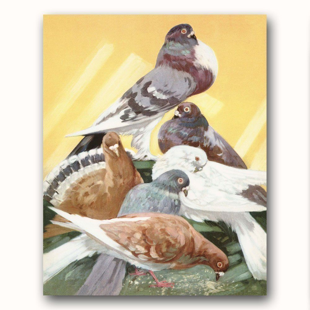 Pigeon Art (Bird Nursery, Doves Wall Art, Farm Decor) -- Unframed ...