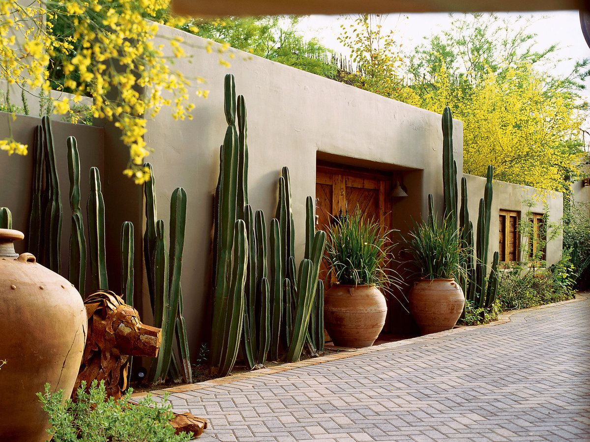 mexican garden design. Southwest Style  Cactus on Guard They form a sculptural screen along this Phoenix garden style Cacti and Gardens