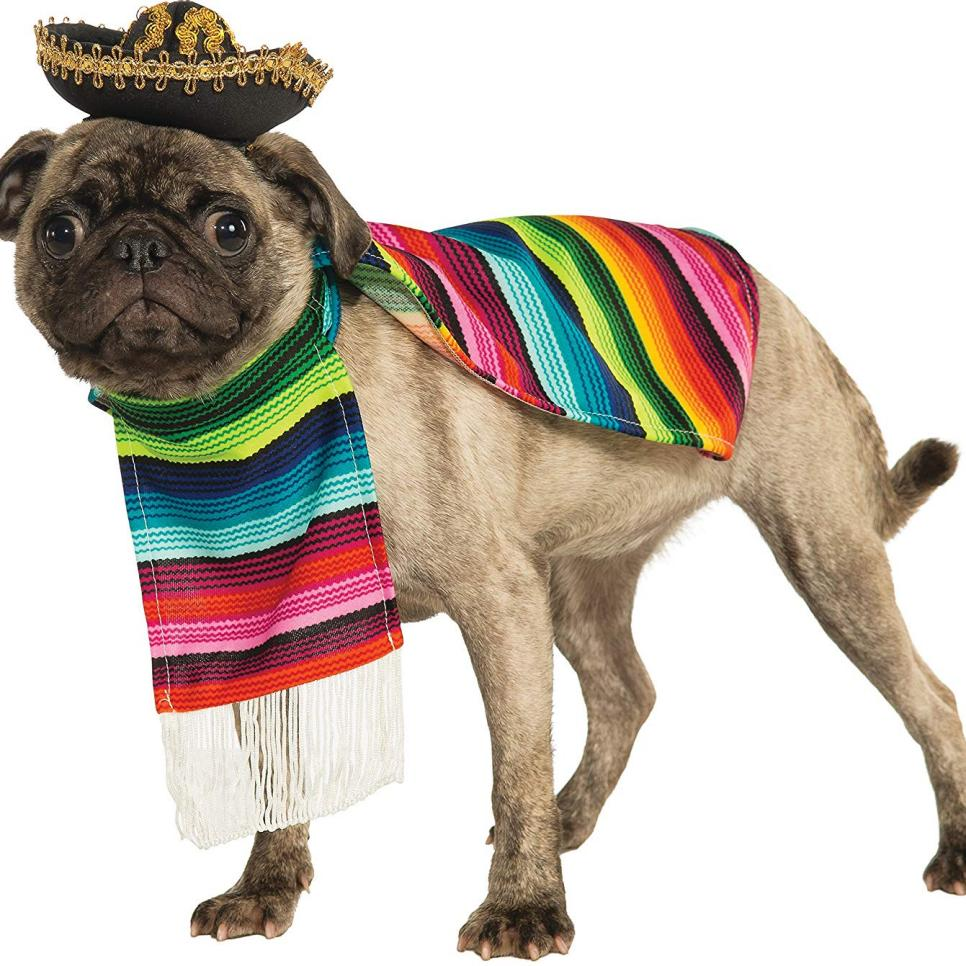Top Small Dog Halloween Costumes From Amazon HGTV Pet