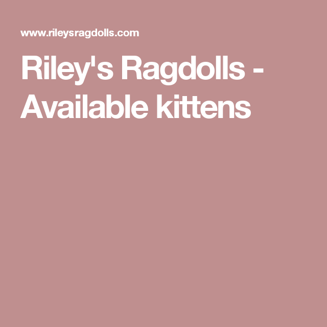 Riley's Ragdolls - Available kittens