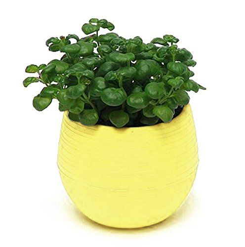 This Is An Extremely Tiny Lightweight Plastic Pot I Don T Understand The Negative Reviews For Size Plastic Flower Pots Small Flower Pots Plastic Plant Pots