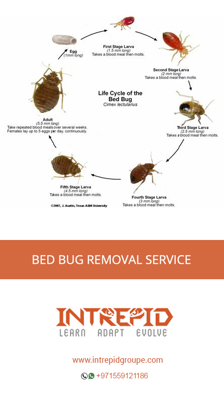 Bed Bugs Size Pictures https//ift.tt/2TL9Yca di 2020